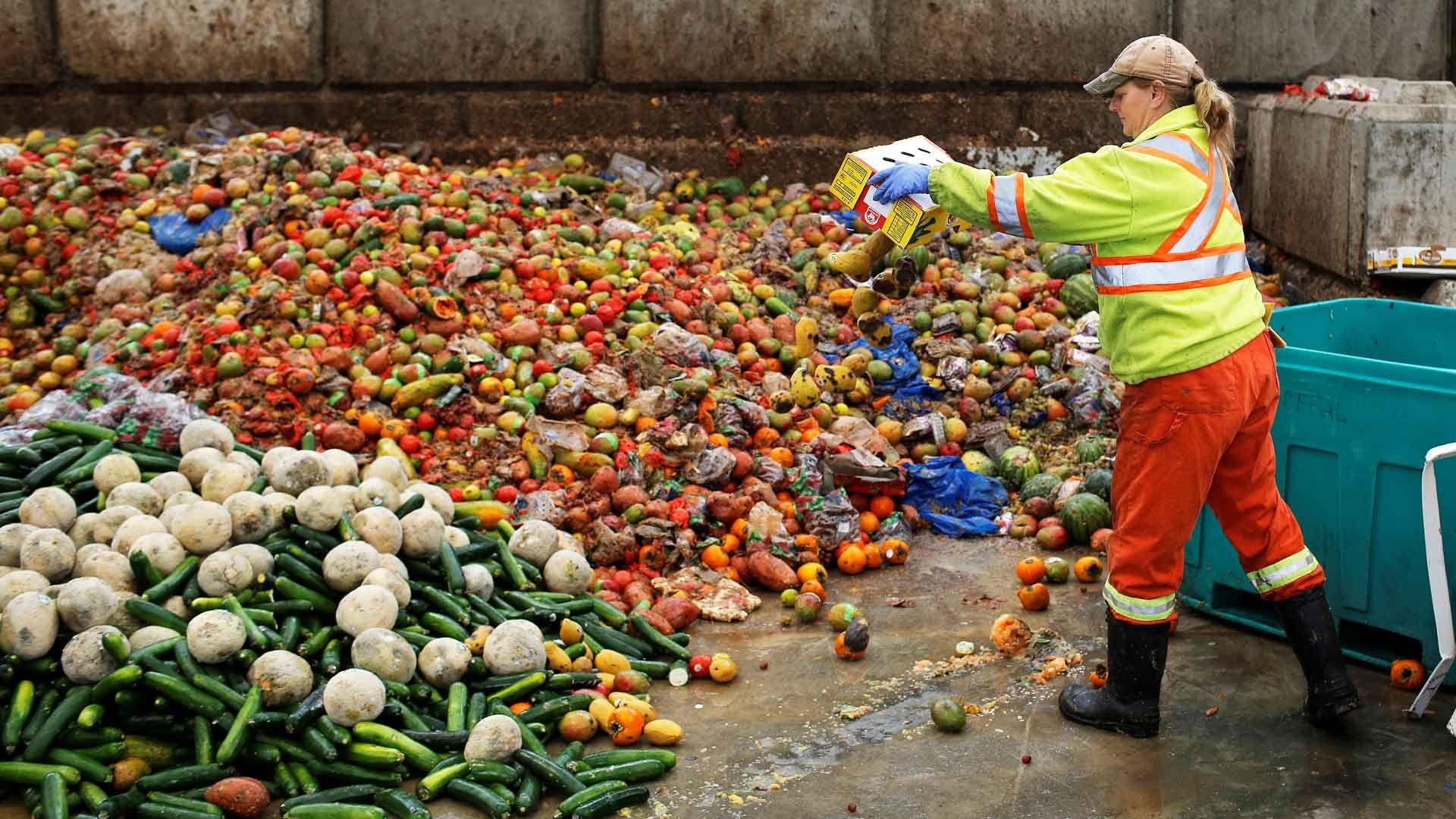 сбор и обработка пищевых отходов