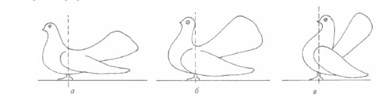 Статность голубей.jpg