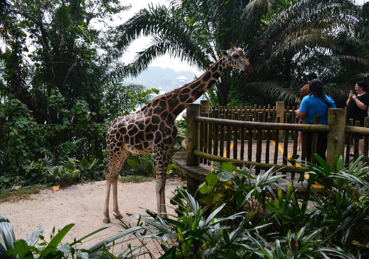 1572808464_zoopark-g_-singapur-41.jpg